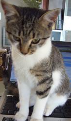 Pisicuta mea - Kira